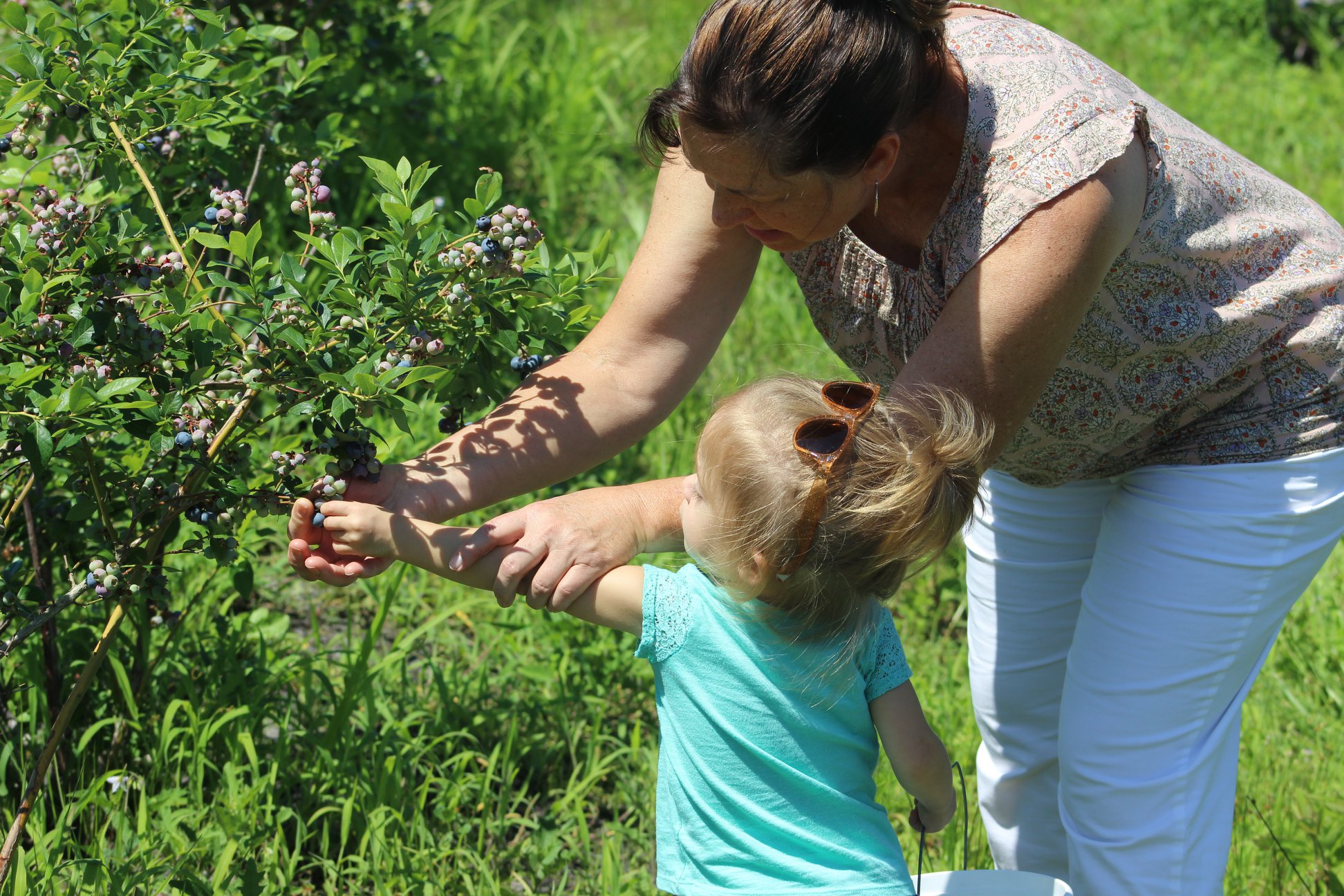 Mother and child pick blueberries